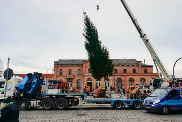 GAAC für die Region Weihnachtsbaum aufstellen